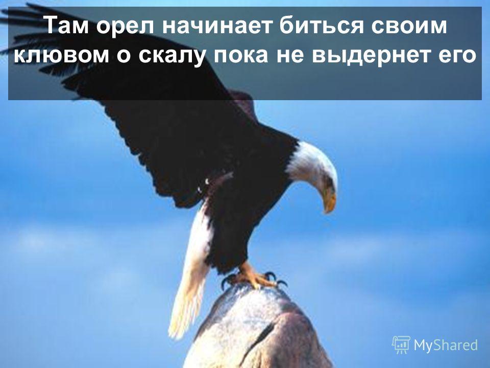Процесс требует чтобы орел улетел на макушку горы и сел в своем гнезде