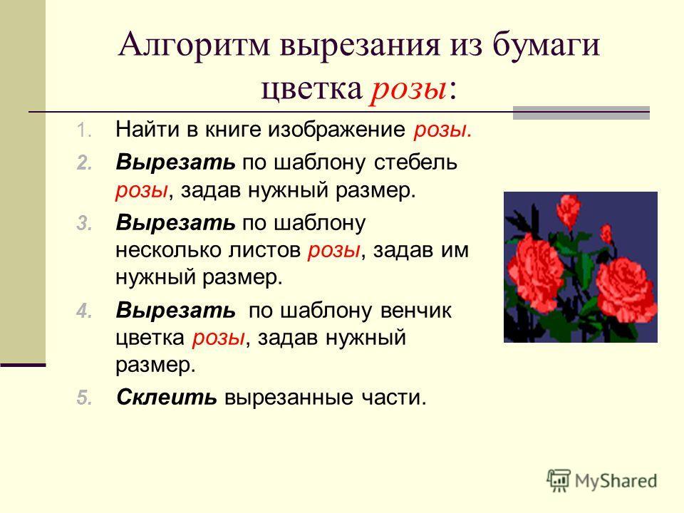 Алгоритм вырезания из бумаги цветка розы: 1. Найти в книге изображение розы. 2. Вырезать по шаблону стебель розы, задав нужный размер. 3. Вырезать по шаблону несколько листов розы, задав им нужный размер. 4. Вырезать по шаблону венчик цветка розы, за