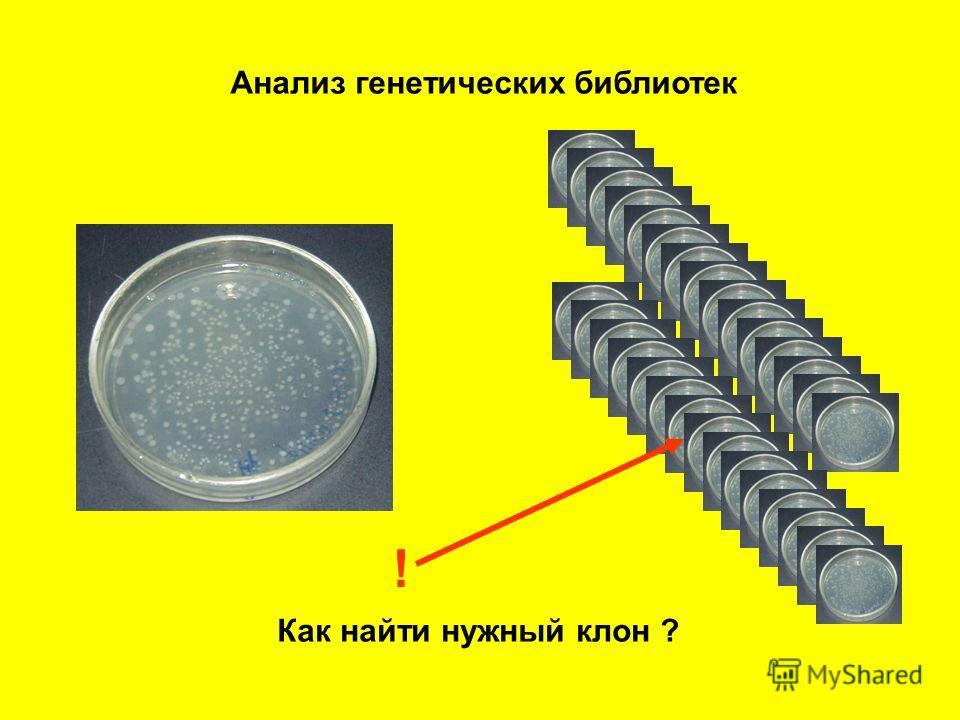 Анализ генетических библиотек ! Как найти нужный клон ?