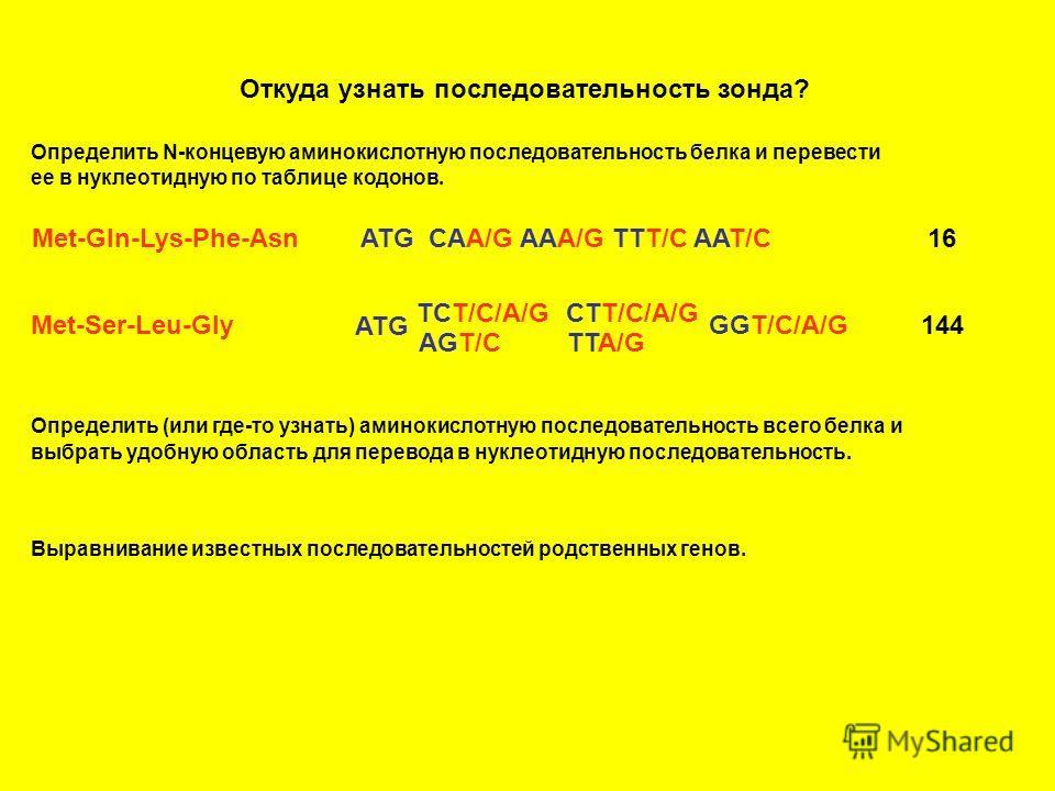 Откуда узнать последовательность зонда? Определить N-концевую аминокислотную последовательность белка и перевести ее в нуклеотидную по таблице кодонов. Met-Gln-Lys-Phe-AsnATG CAA/G AAA/G TTT/C AAT/C16 Met-Ser-Leu-Gly ATG TCT/C/A/G AGT/C CTT/C/A/G TTA