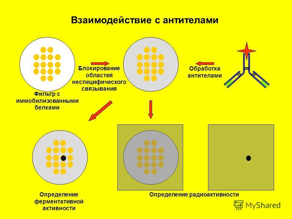 Взаимодействие с антителами Фильтр с иммобилизованными белками Блокирование областей неспецифического связывания Обработка антителами Определение ферментативной активности Определение радиоактивности