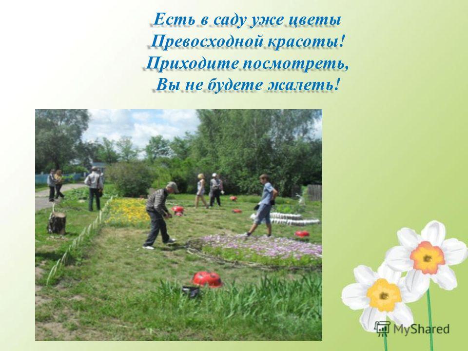 Есть в саду уже цветы Превосходной красоты! Приходите посмотреть, Вы не будете жалеть!