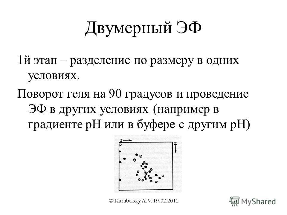 Двумерный ЭФ 1й этап – разделение по размеру в одних условиях. Поворот геля на 90 градусов и проведение ЭФ в других условиях (например в градиенте рН или в буфере с другим рН) © Karabelsky A.V. 19.02.2011