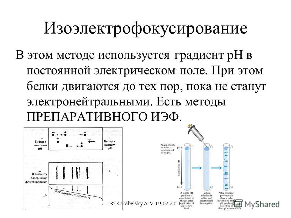 Изоэлектрофокусирование В этом методе используется градиент рН в постоянной электрическом поле. При этом белки двигаются до тех пор, пока не станут электронейтральными. Есть методы ПРЕПАРАТИВНОГО ИЭФ. © Karabelsky A.V. 19.02.2011