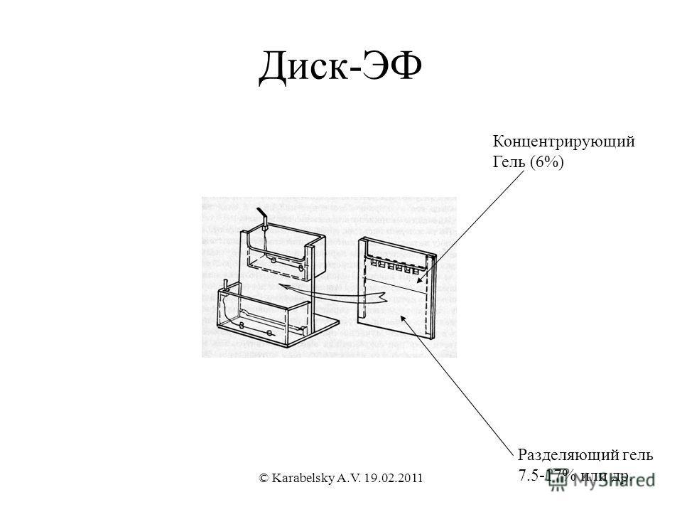 Диск-ЭФ Концентрирующий Гель (6%) Разделяющий гель 7.5-17% или др. © Karabelsky A.V. 19.02.2011