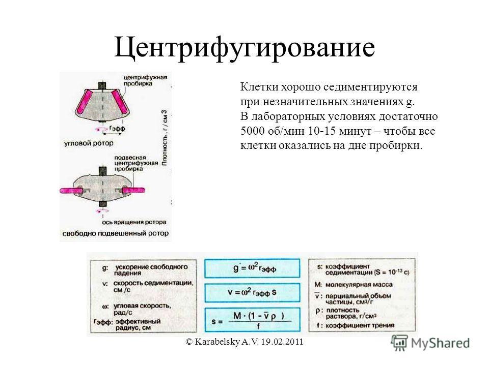 Центрифугирование Клетки хорошо седиментируются при незначительных значениях g. В лабораторных условиях достаточно 5000 об/мин 10-15 минут – чтобы все клетки оказались на дне пробирки. © Karabelsky A.V. 19.02.2011
