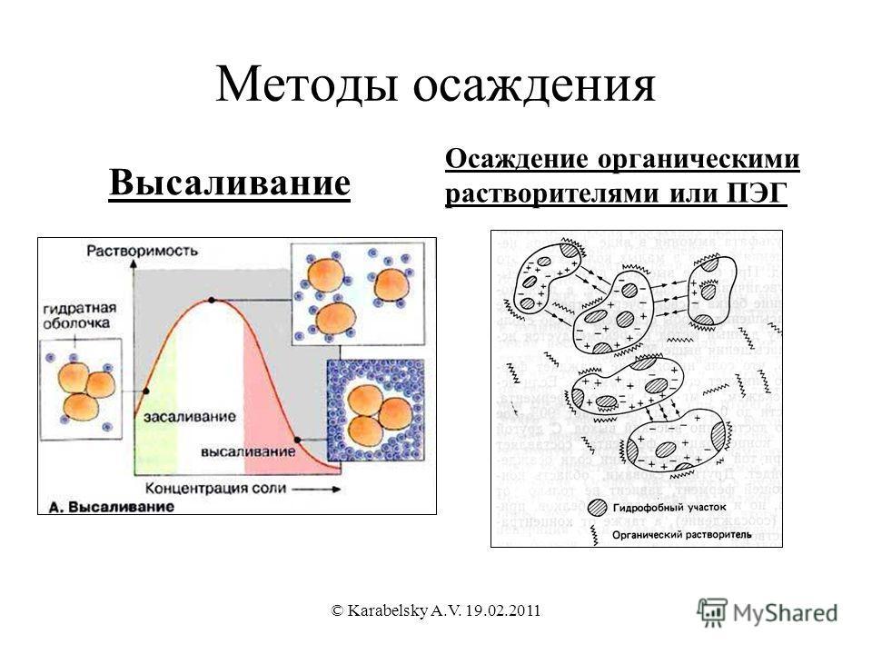 Методы осаждения Высаливание Осаждение органическими растворителями или ПЭГ © Karabelsky A.V. 19.02.2011