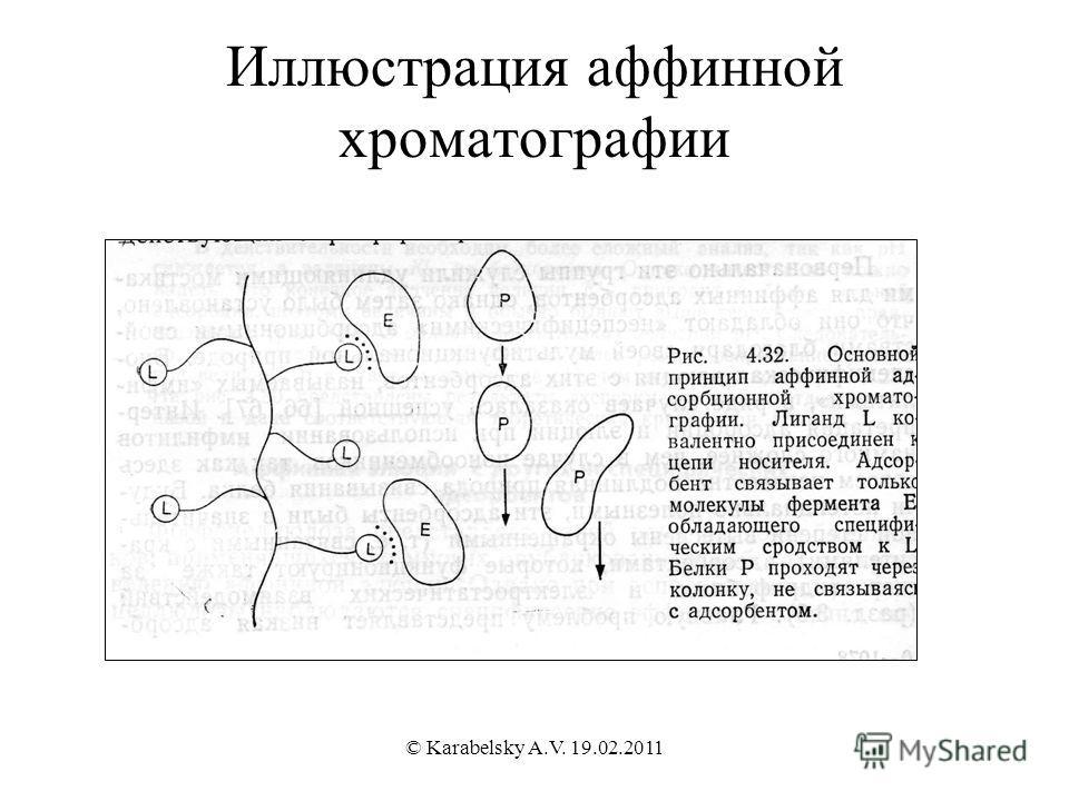 Иллюстрация аффинной хроматографии © Karabelsky A.V. 19.02.2011