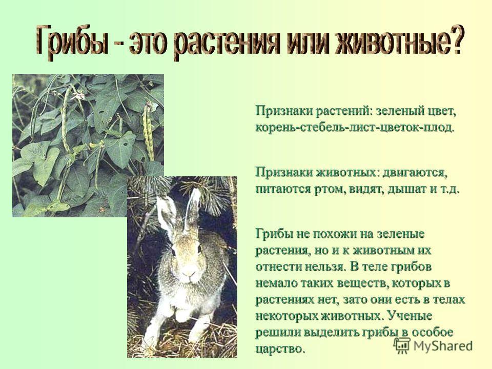 Грибы не похожи на зеленые растения, но и к животным их отнести нельзя. В теле грибов немало таких веществ, которых в растениях нет, зато они есть в телах некоторых животных. Ученые решили выделить грибы в особое царство. Признаки растений: зеленый ц