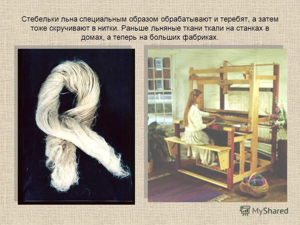 Стебельки льна специальным образом обрабатывают и теребят, а затем тоже скручивают в нитки. Раньше льняные ткани ткали на станках в домах, а теперь на больших фабриках.