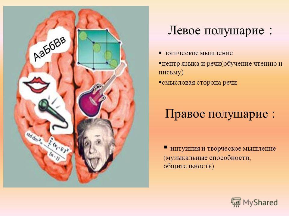 Правое полушарие : интуиция и творческое мышление (музыкальные способности, общительность) Левое полушарие : логическое мышление центр языка и речи(обучение чтению и письму) смысловая сторона речи