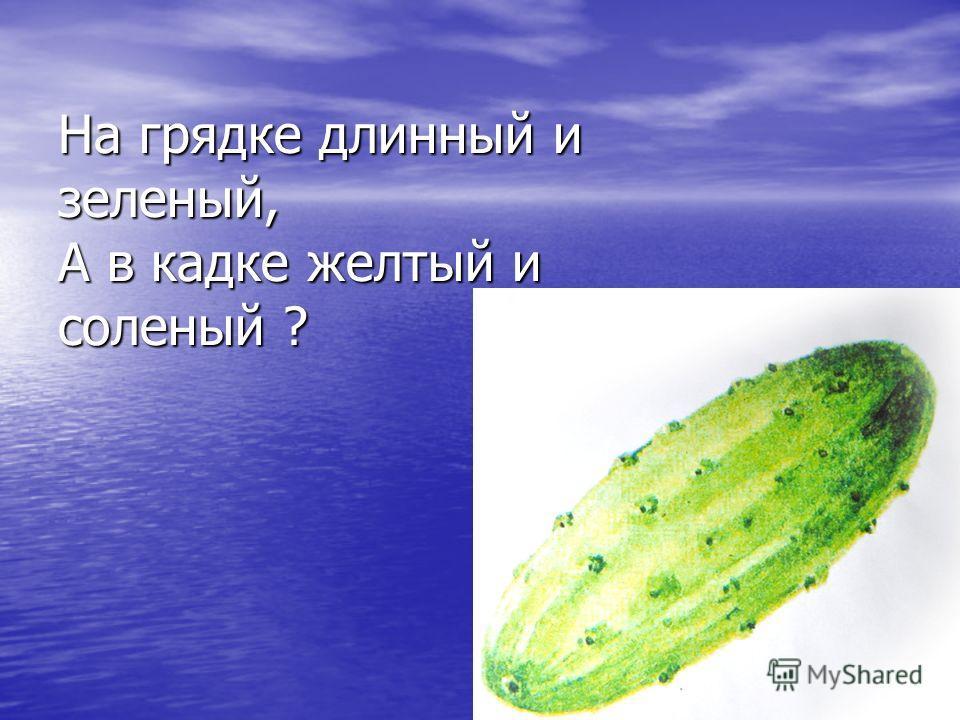 На грядке длинный и зеленый, А в кадке желтый и соленый ?