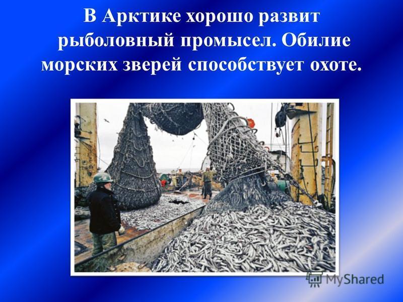 В Арктике хорошо развит рыболовный промысел. Обилие морских зверей способствует охоте.