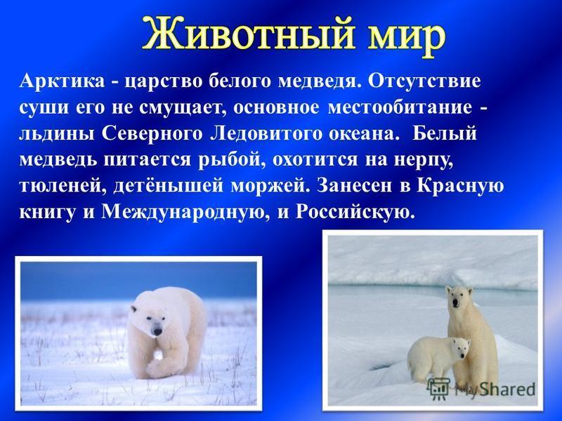 Арктика - царство белого медведя. Отсутствие суши его не смущает, основное местообитание - льдины Северного Ледовитого океана. Белый медведь питается рыбой, охотится на нерпу, тюленей, детёнышей моржей. Занесен в Красную книгу и Международную, и Росс
