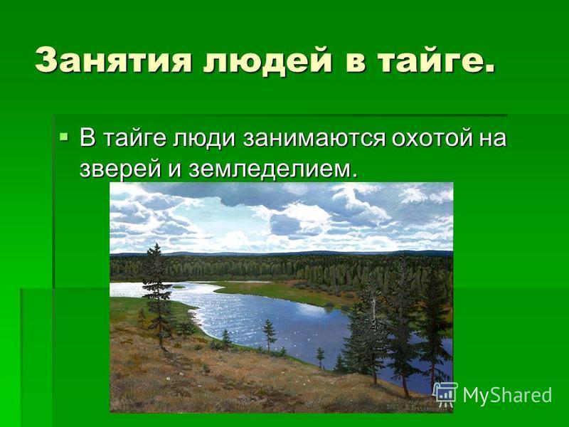 Занятия людей в тайге. В тайге люди занимаются охотой на зверей и земледелием. В тайге люди занимаются охотой на зверей и земледелием.