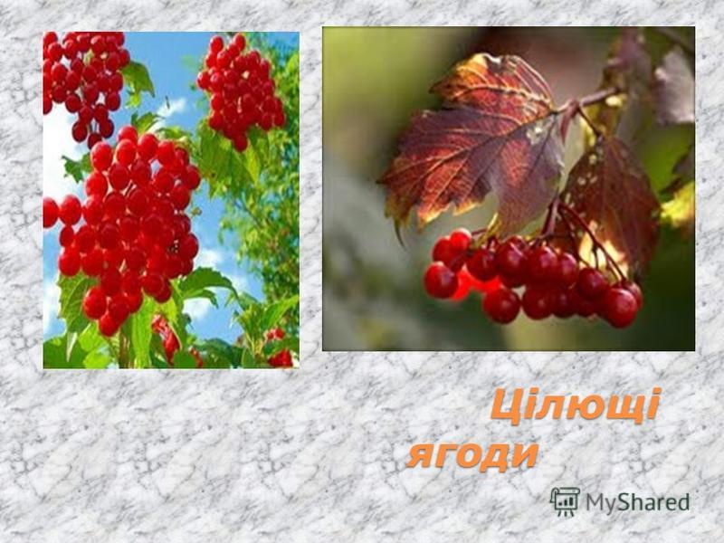 Цілющі ягоди Цілющі ягоди