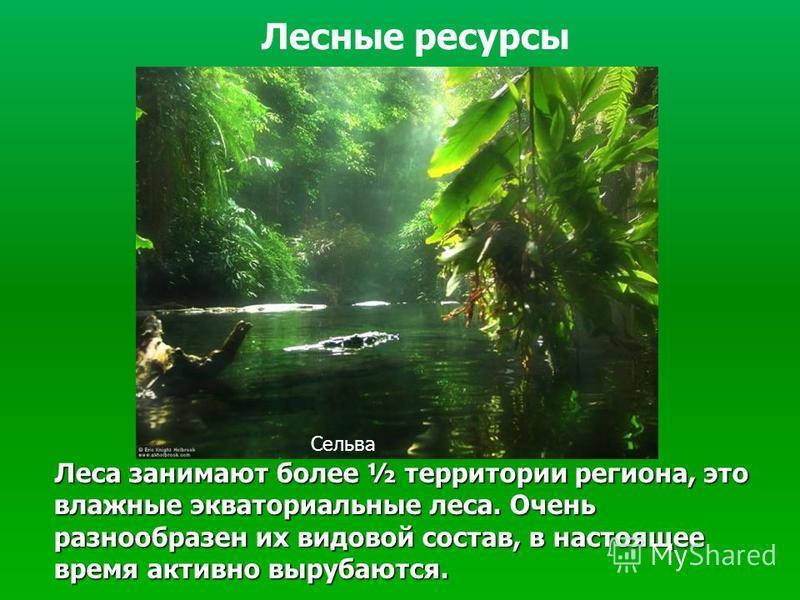 Леса занимают более ½ территории региона, это влажные экваториальные леса. Очень разнообразен их видовой состав, в настоящее время активно вырубаются. Леса занимают более ½ территории региона, это влажные экваториальные леса. Очень разнообразен их ви