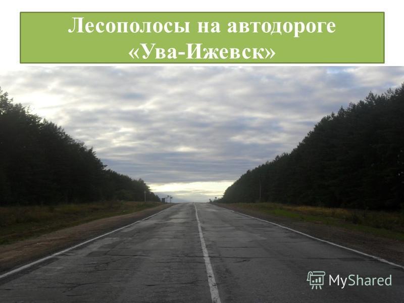Лесополосы на автодороге «Ува-Ижевск»