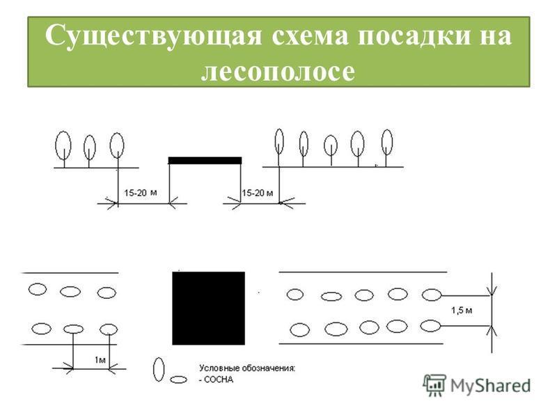 Существующая схема посадки на лесополосе
