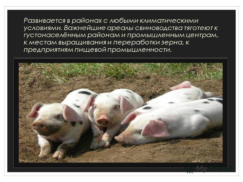 Развивается в районах с любыми климатическими условиями. Важнейшие ареалы свиноводства тяготеют к густонаселённым районам и промышленным центрам, к местам выращивания и переработки зерна, к предприятиям пищевой промышленности.