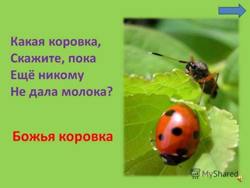 Прыгает пружинка – Зелёная спинка – С травы на былинку, С ветки на тропинку. Кузнечик