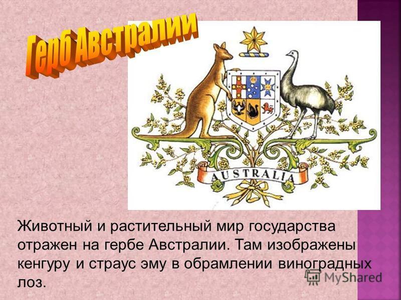 Животный и растительный мир государства отражен на гербе Австралии. Там изображены кенгуру и страус эму в обрамлении виноградных лоз.