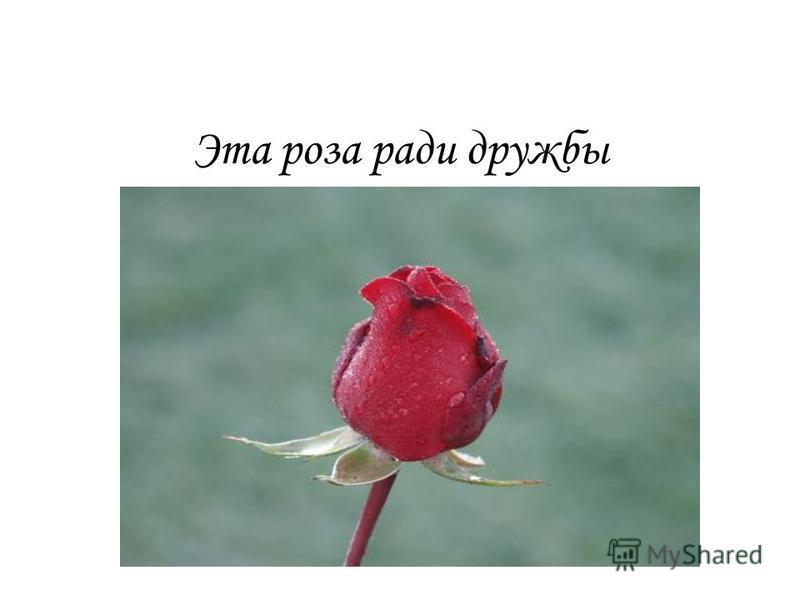Эта роза ради дружбы