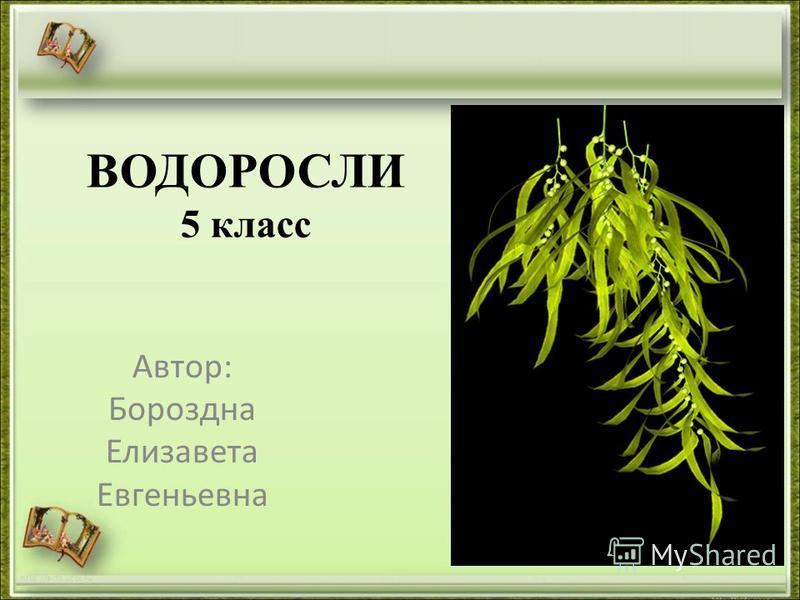 ВОДОРОСЛИ 5 класс Автор: Бороздна Елизавета Евгеньевна http://aida.ucoz.ru