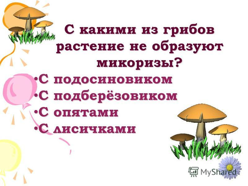 С какими из грибов растение не образуют микоризы? С подосиновиком С подосиновиком С подберёзовиком С подберёзовиком С опятами С опятами С лисичками С лисичками