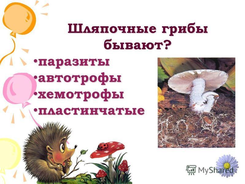Шляпочные грибы бывают? паразиты паразиты автотрофы автотрофы хемотрофы хемотрофы пластинчатые пластинчатые