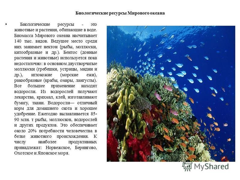 Биологические ресурсы Мирового океана Биологические ресурсы - это животные и растения, обитающие в воде. Биомасса Мирового океана насчитывает 140 тыс. видов. Ведущее место среди них занимает нектон {рыбы, моллюски, китообразные и др.). Бентос (донные