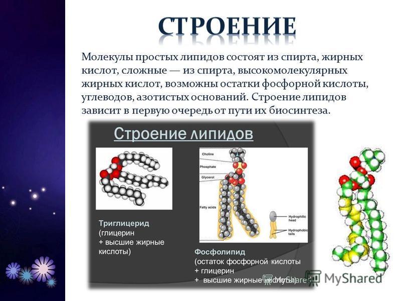 Молекулы простых липидов состоят из спирта, жирных кислот, сложные из спирта, высокомолекулярных жирных кислот, возможны остатки фосфорной кислоты, углеводов, азотистых оснований. Строение липидов зависит в первую очередь от пути их биосинтеза.