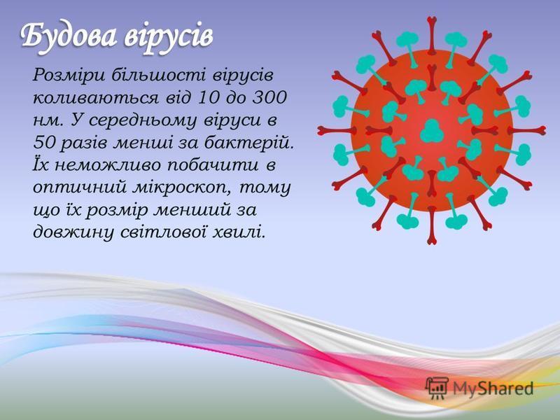 Розміри більшості вірусів коливаються від 10 до 300 нм. У середньому віруси в 50 разів менші за бактерій. Їх неможливо побачити в оптичний мікроскоп, тому що їх розмір менший за довжину світлової хвилі.