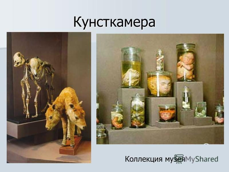 Кунсткамера Коллекция музея
