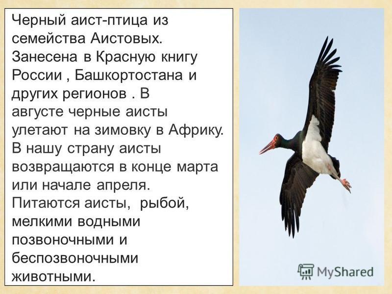 Скачать книгу черные птицы