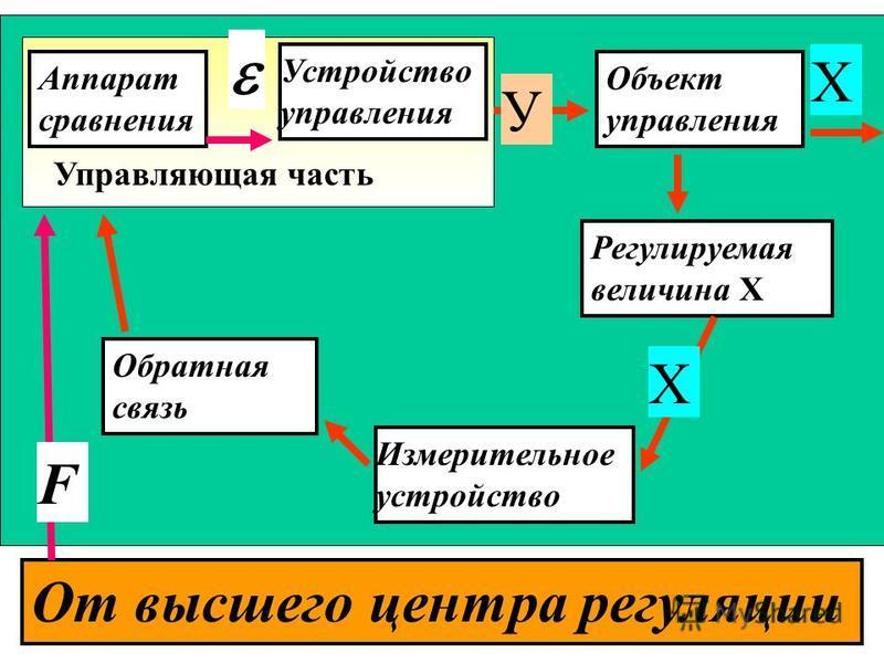 Управляющая часть Аппарат сравнения Устройство управления Объект управления Регулируемая величина Х Обратная связь Измерительное устройство От высшего центра регуляции F Х У Х