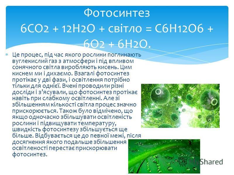 Це процес, під час якого рослини поглинають вуглекислий газ з атмосфери і під впливом сонячного світла виробляють кисень. Цим киснем ми і дихаємо. Взагалі фотосинтез протікає у дві фази, і освітлення потрібно тільки для однієї. Вчені проводили різні