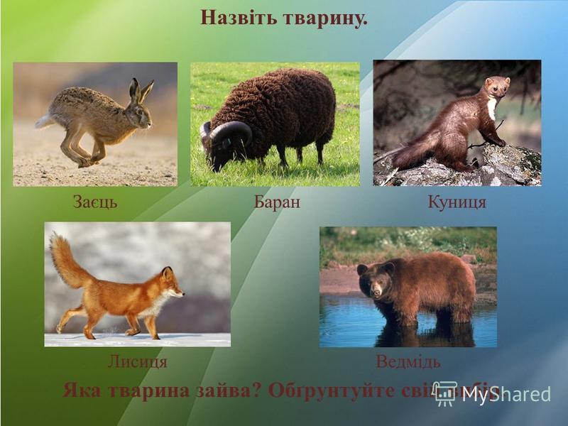 Назвіть тварину. Яка тварина зайва? Обґрунтуйте свій вибір. ЗаєцьБаранКуниця ЛисицяВедмідь