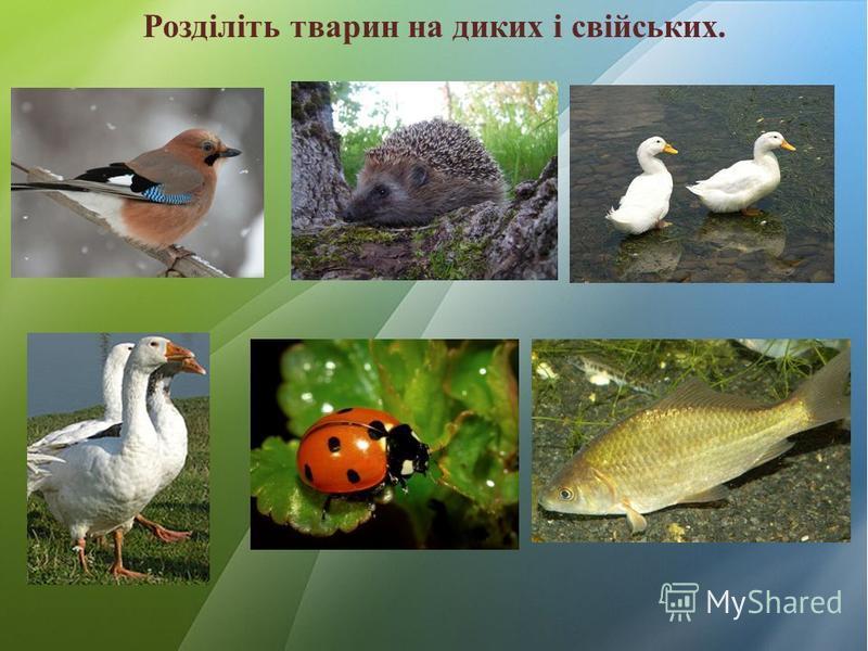 Розділіть тварин на диких і свійських.