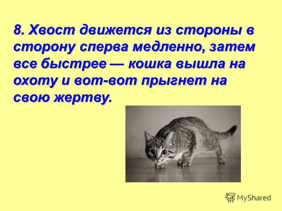 8. Хвост движется из стороны в сторону сперва медленно, затем все быстрее кошка вышла на охоту и вот-вот прыгнет на свою жертву.