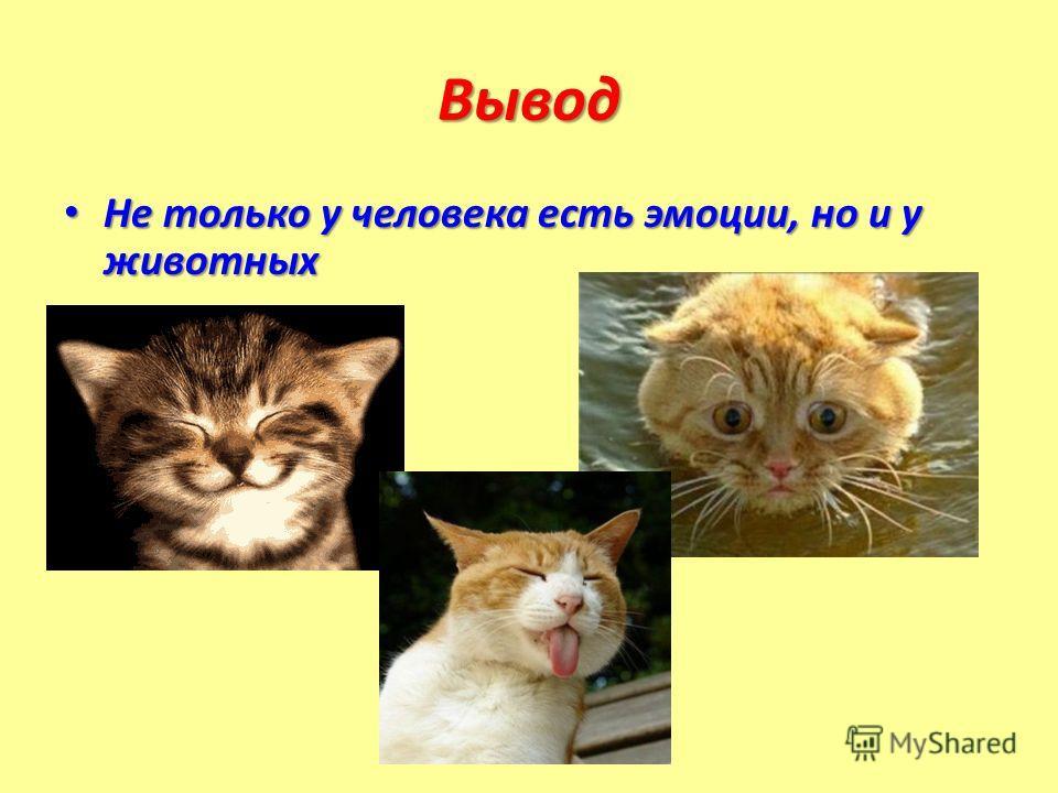 Вывод Не только у человека есть эмоции, но и у животных Не только у человека есть эмоции, но и у животных