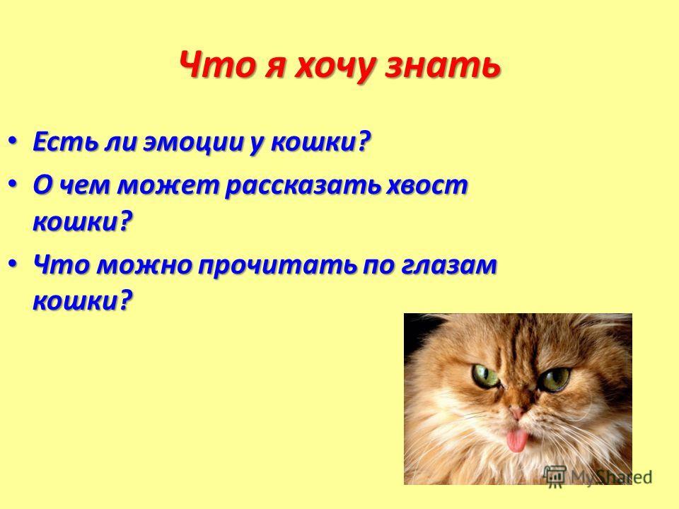 Что я хочу знать Есть ли эмоции у кошки? Есть ли эмоции у кошки? О чем может рассказать хвост кошки? О чем может рассказать хвост кошки? Что можно прочитать по глазам кошки? Что можно прочитать по глазам кошки?