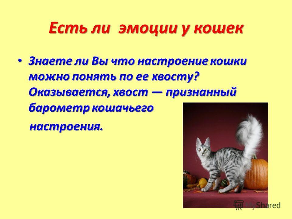 Есть ли эмоции у кошек Знаете ли Вы что настроение кошки можно понять по ее хвосту? Оказывается, хвост признанный барометр кошачьего Знаете ли Вы что настроение кошки можно понять по ее хвосту? Оказывается, хвост признанный барометр кошачьего настрое