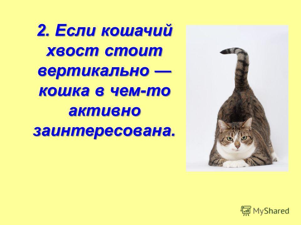2. Если кошачий хвост стоит вертикально кошка в чем-то активно заинтересована.