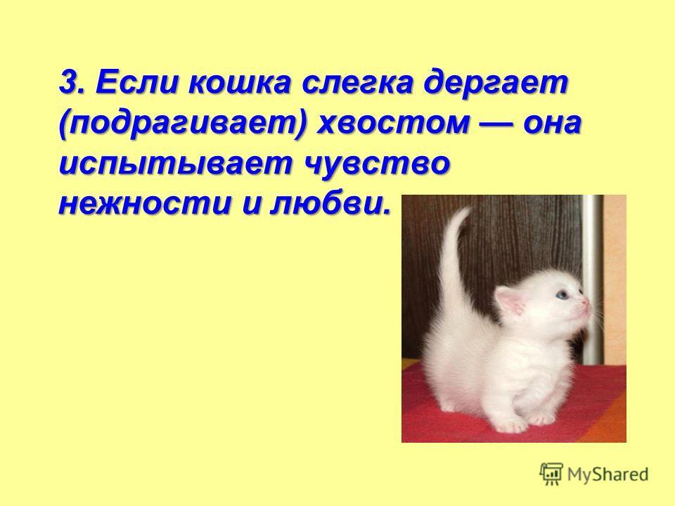 3. Если кошка слегка дергает (подрагивает) хвостом она испытывает чувство нежности и любви.