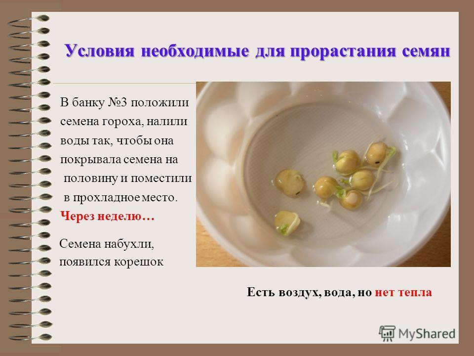 Презентацию на тему условия жизни растений