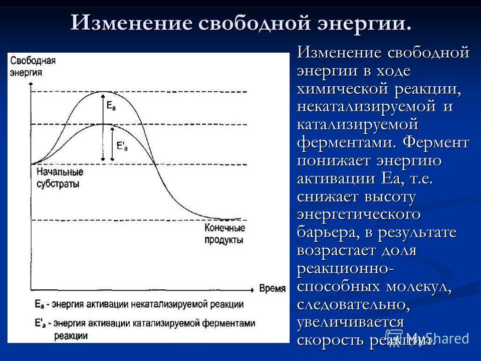 Изменение свободной энергии в ходе химической реакции, некатализируемой и катализируемой ферментами. Фермент понижает энергию активации Еа, т.е. снижает высоту энергетического барьера, в результате возрастает доля реакционно- способных молекул, следо