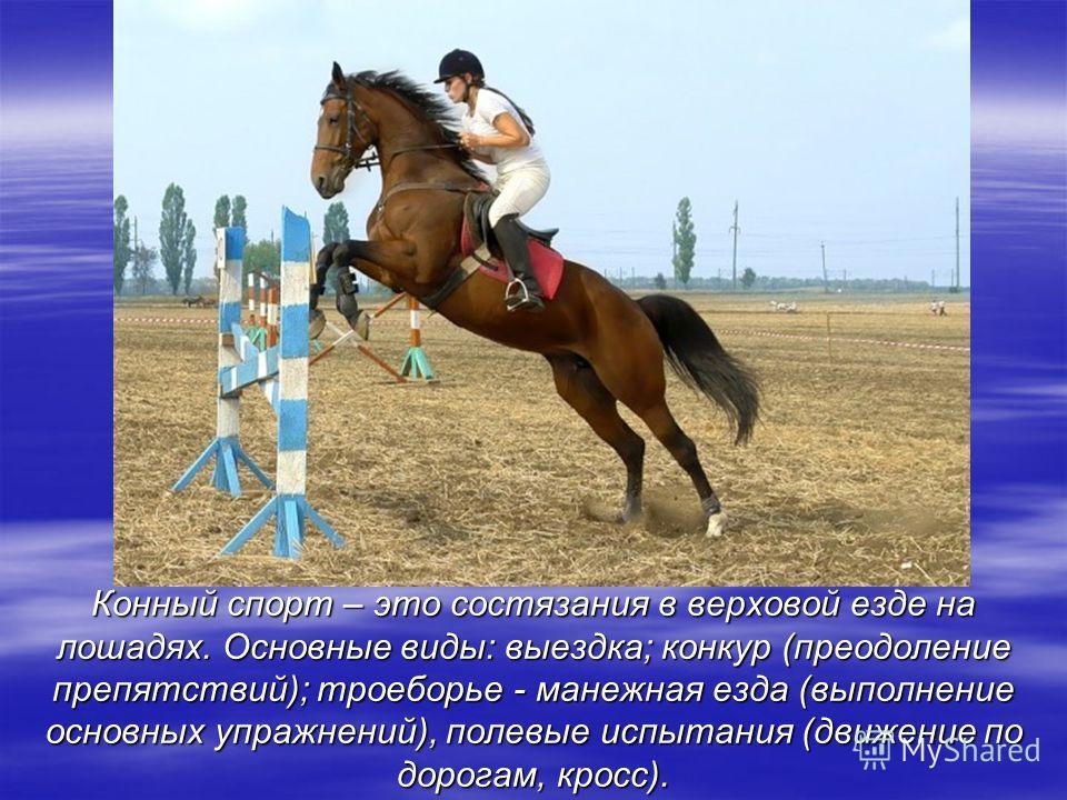 Конный спорт – это состязания в верховой езде на лошадях. Основные виды: выездка; конкур (преодоление препятствий); троеборье - манежная езда (выполнение основных упражнений), полевые испытания (движение по дорогам, кросс).