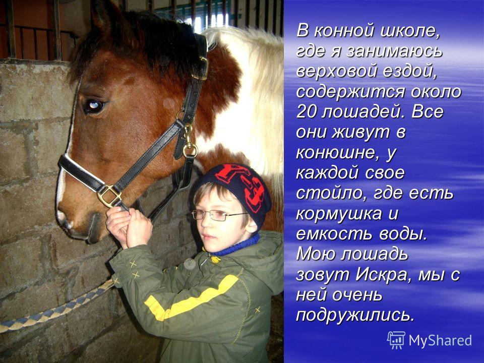 В конной школе, где я занимаюсь верховой ездой, содержится около 20 лошадей. Все они живут в конюшне, у каждой свое стойло, где есть кормушка и емкость воды. Мою лошадь зовут Искра, мы с ней очень подружились. В конной школе, где я занимаюсь верховой
