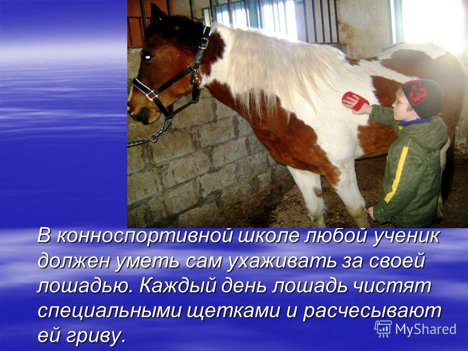В конноспортивной школе любой ученик должен уметь сам ухаживать за своей лошадью. Каждый день лошадь чистят специальными щетками и расчесывают ей гриву. В конноспортивной школе любой ученик должен уметь сам ухаживать за своей лошадью. Каждый день лош